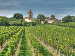 A Bordeaux Wine Farm